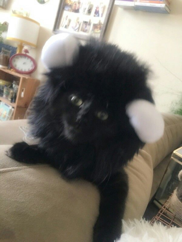 How To Make Your Cat Hate You Her Wear A Hat