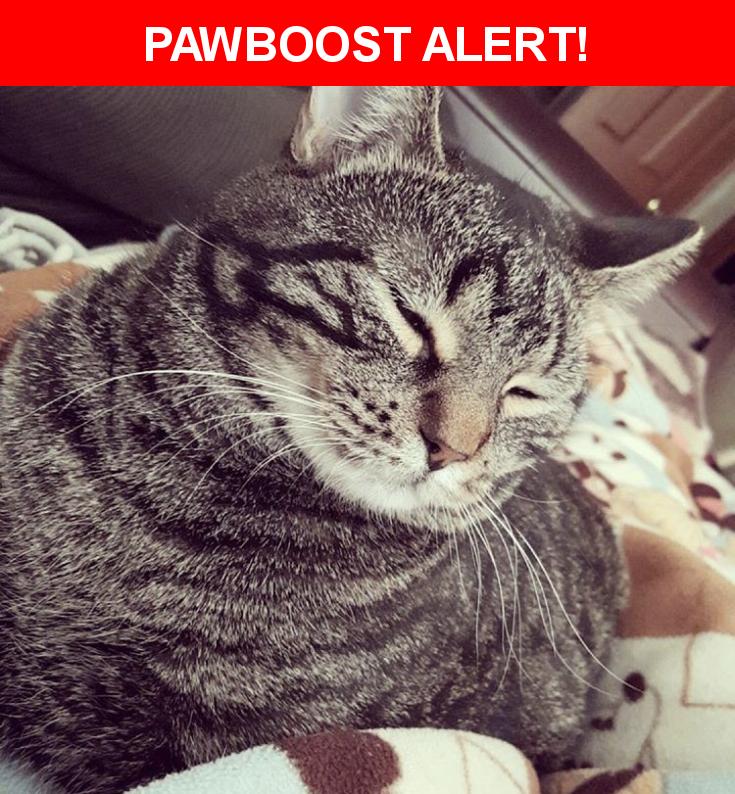 Please spread the word! Oliver was last seen in Roscoe, IL 61073.    Nearest Address: Near Clearwing Ln & Pine White Rd