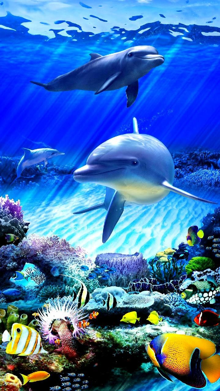 Download Fishes Wallpaper By Georgekev 6d Free On Zedge Now Browse Millions Of Popular Dolphin Wallpapers And Ringtones On Ze Fish Wallpaper Fish Animals