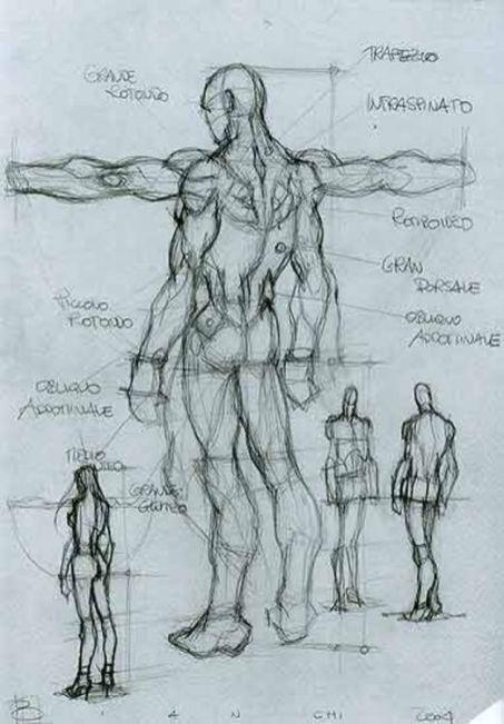 Character Male Anatomy28 Artistic Drawingatomy Figure Human