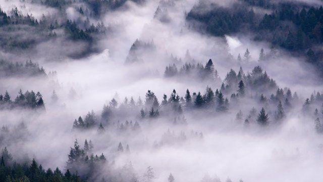 Pacific Northwest Forest Desktop