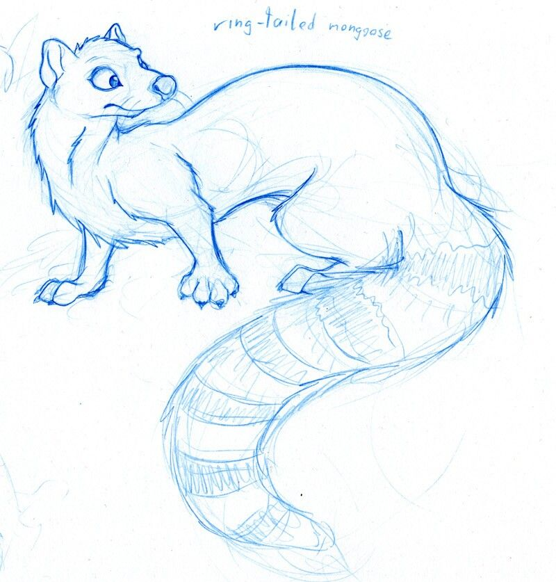 Base Idea Of Mongoose In A Cartoon Form Animal Drawings Animal
