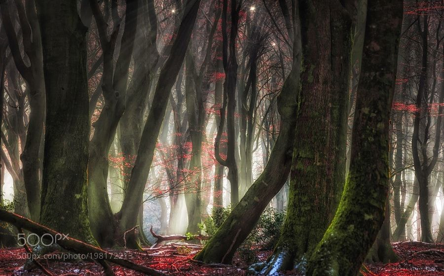 Green happiness by JanHermanVisser Nature Pinterest Happiness