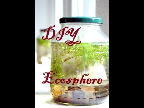 (17162) Building your own DIY Ecosphere - YouTube