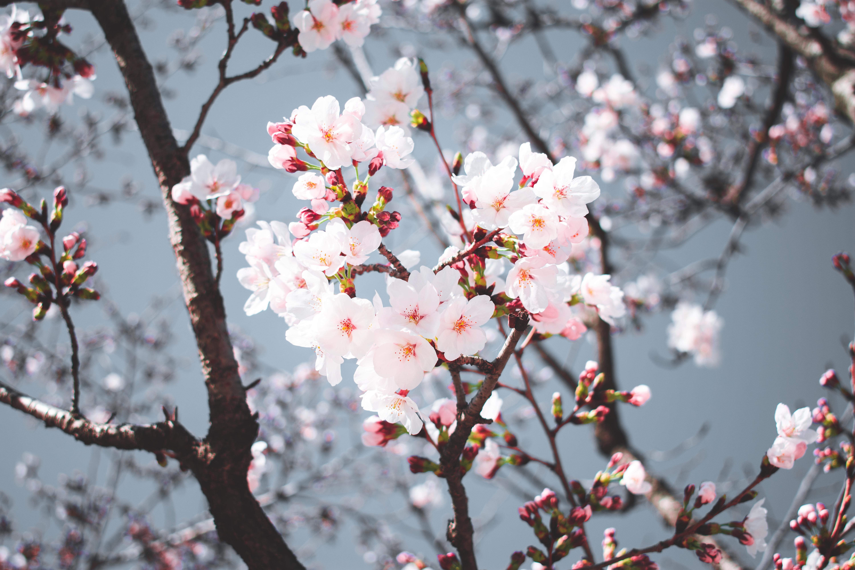 ITAP of the cherry blossom in korea by YooMisterWhite . . . . #photos #amazingworld #world #amazingphotography #amateurphotography #photography #incrediblephotos