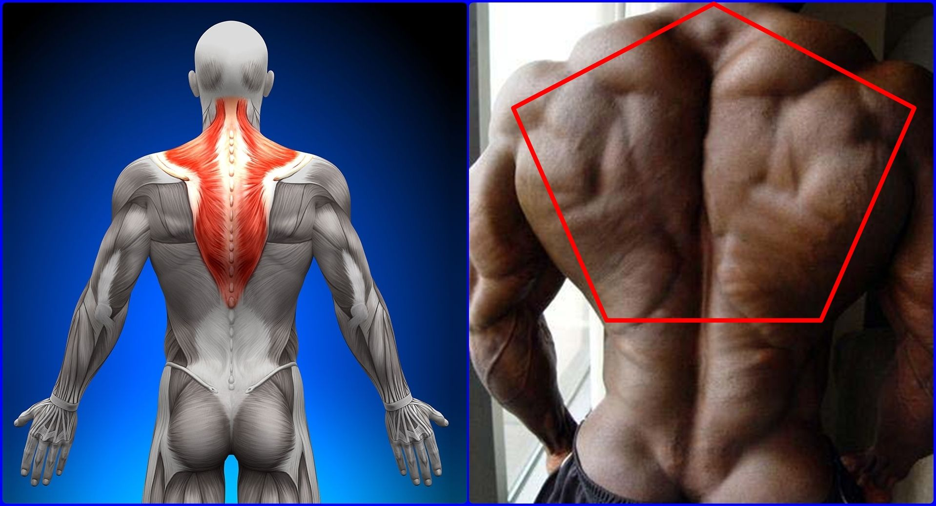 image result for trapezius muscle | anatomy | pinterest | the, Muscles