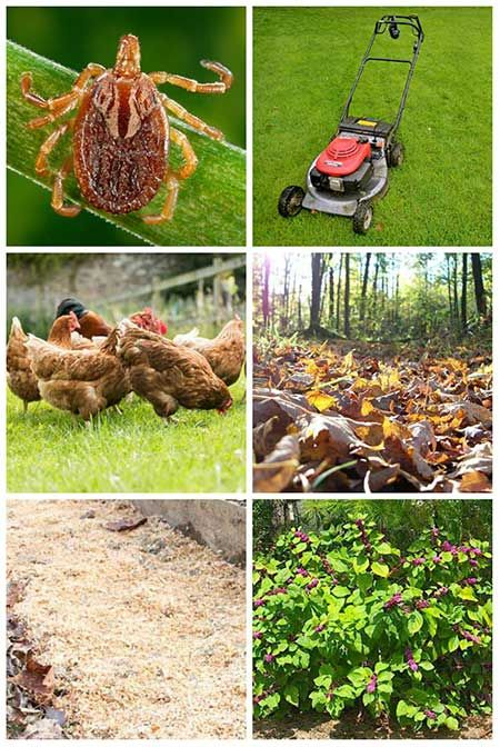 See how you can naturally keep ticks out of your garden by ...