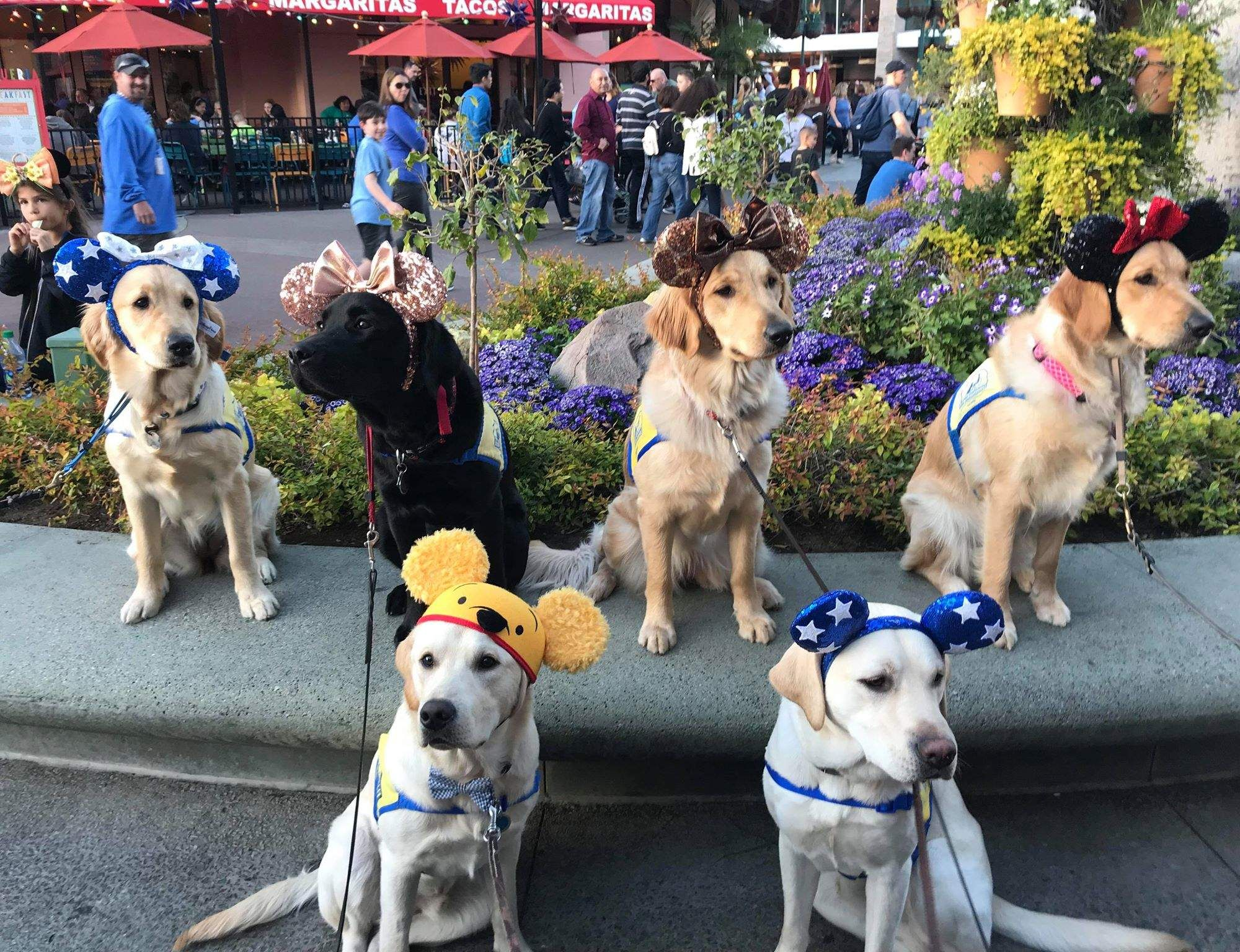 Service Dogs In Training Take Adorable Field Trip To