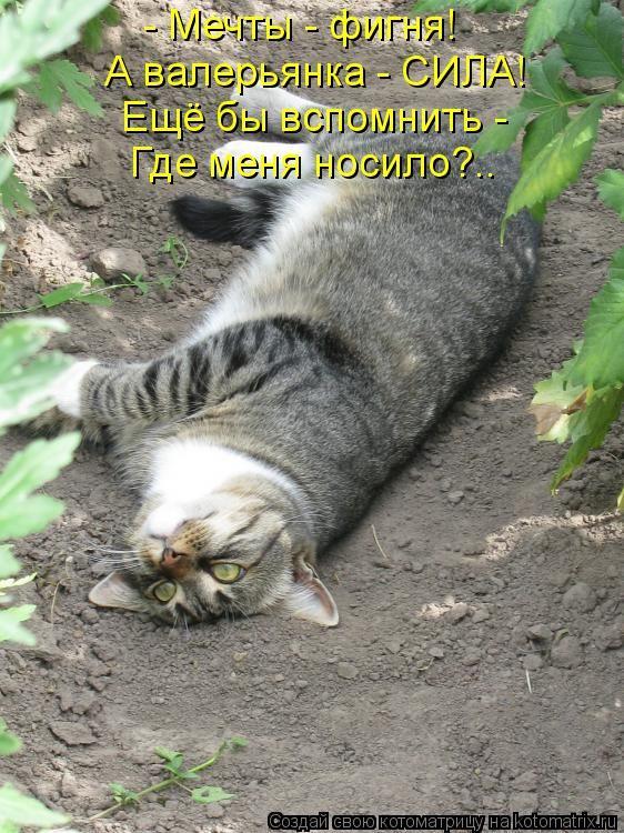 Спокойной ночи, смешные картинки про лень и усталость