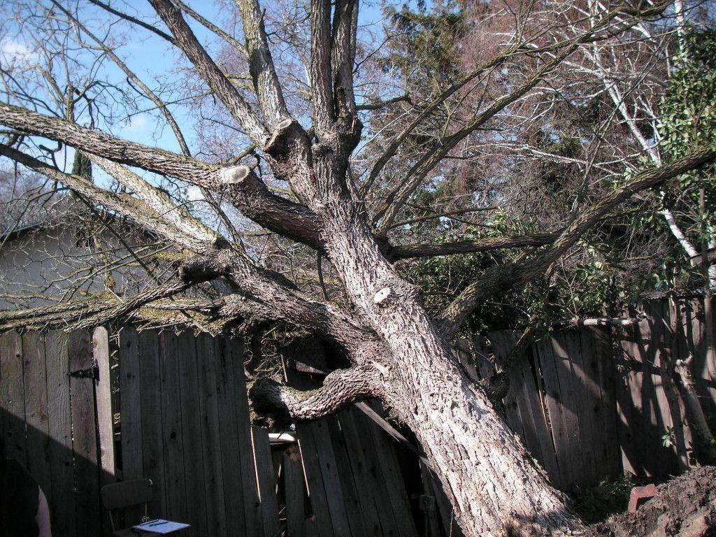 Full emergency tree services 770 7443909 emergency