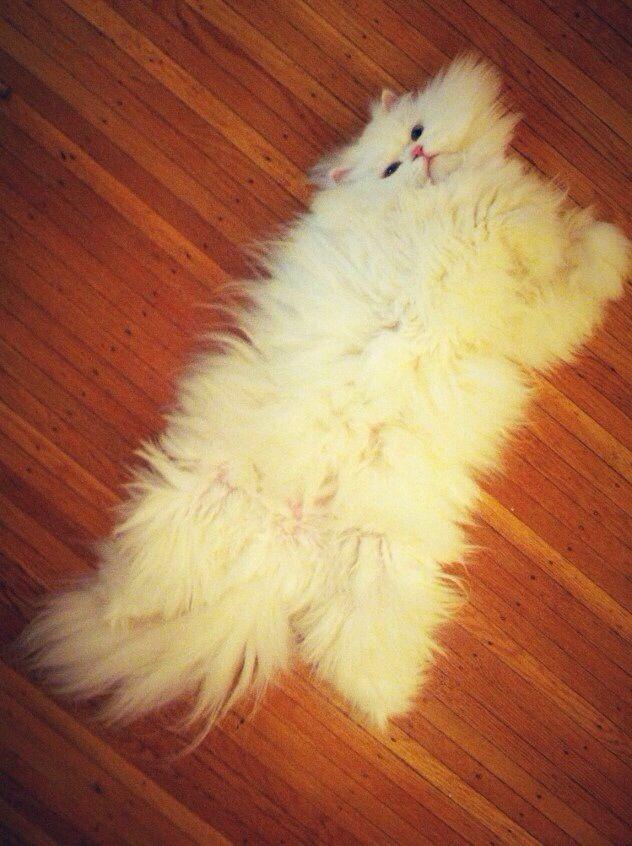 Cat Rug Kitten Pictures Kittens Cutest Kittens