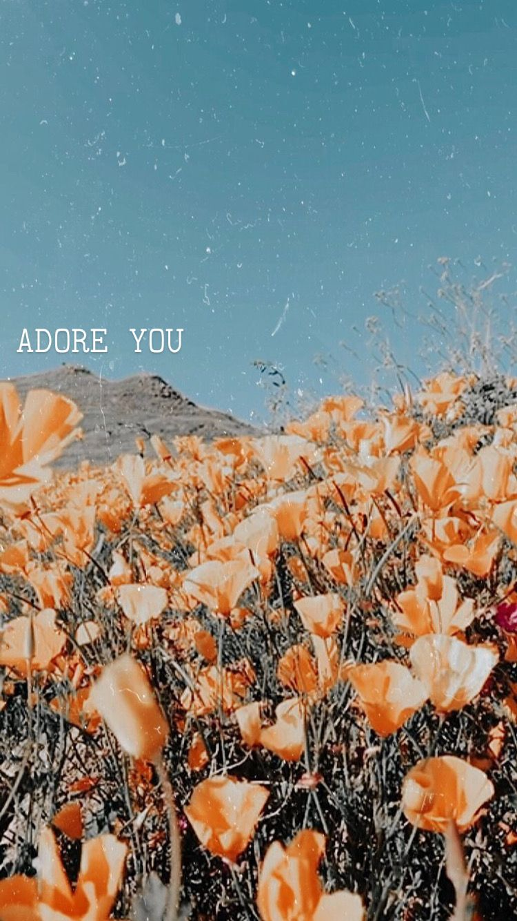 Harry Styles Wallpaper Adore You With Images Photo