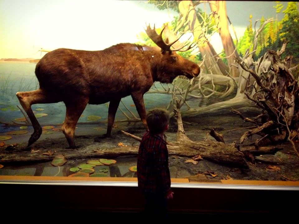 Bell Museum of Natural History in Minneapolis, MN