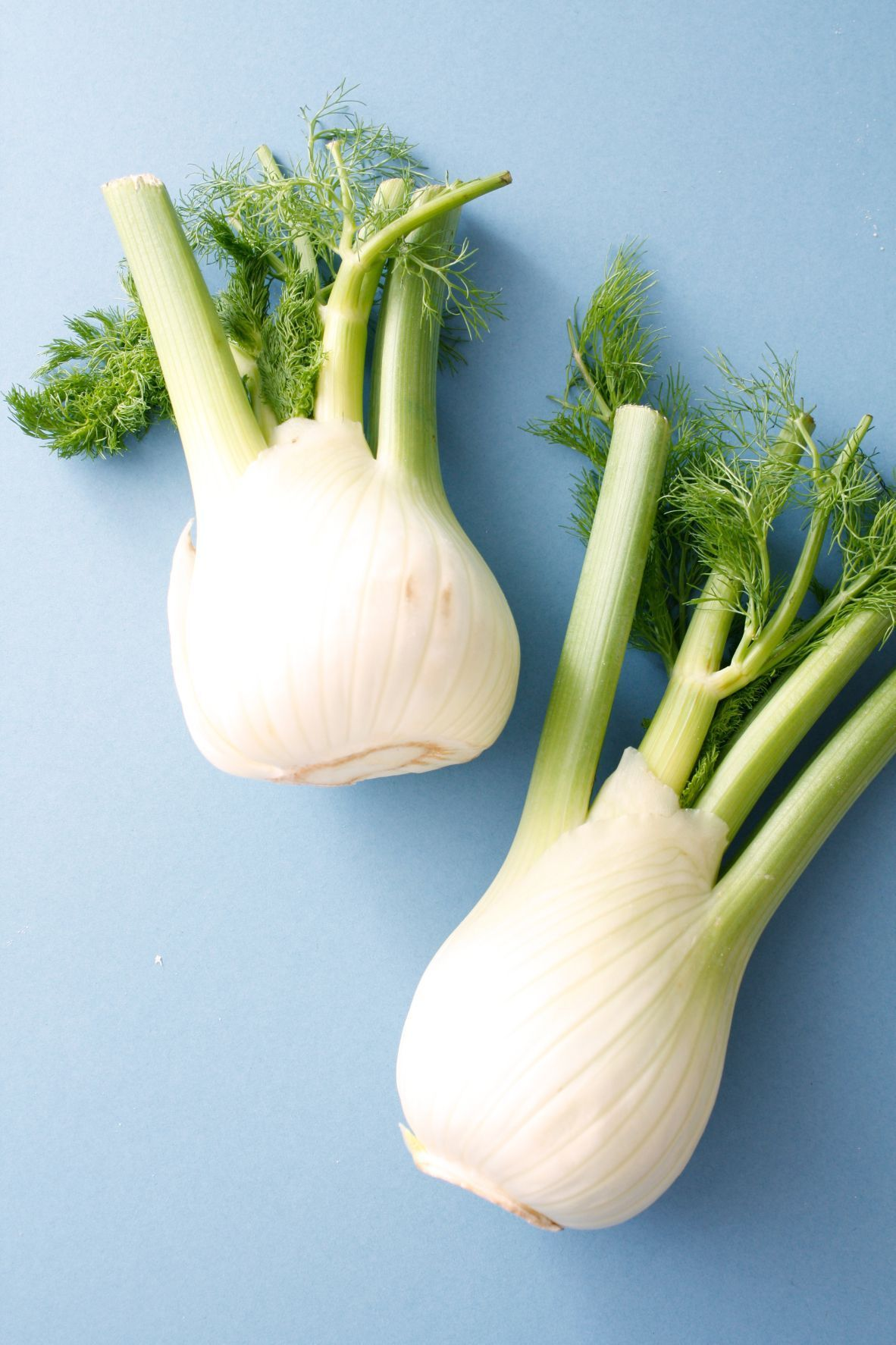 Fennel A Source Of Estrogen And Vitamin C