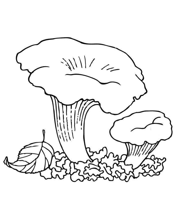 картинки нарисовать гриб лисичку даже удалось запереть