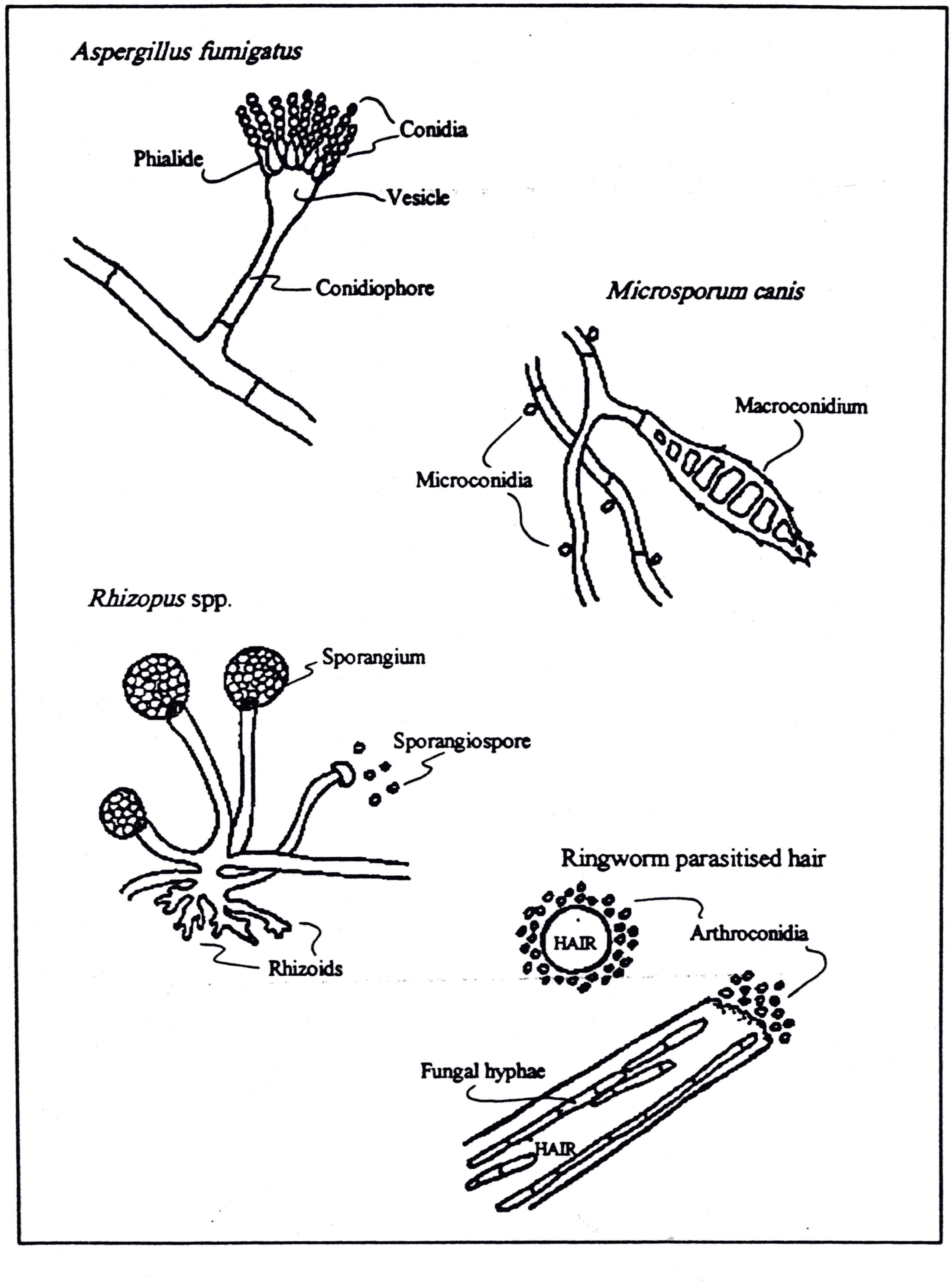 Fungi Image By Nathaniel Hannemann