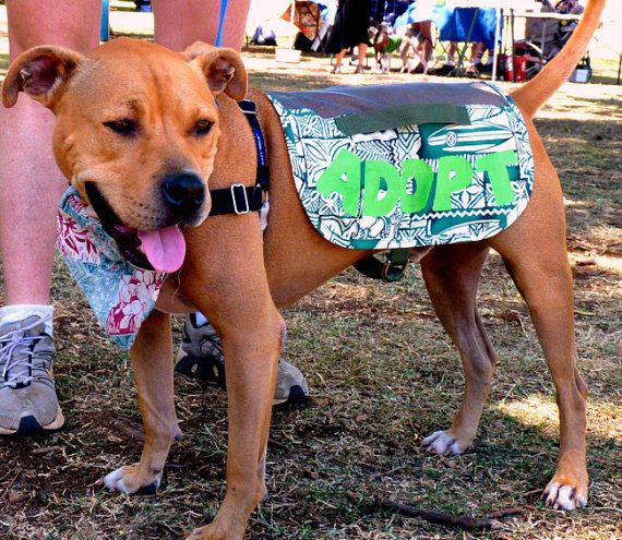 Adopt Me Dog Vest Pattern Rescue Dog PDF Pattern EZ to