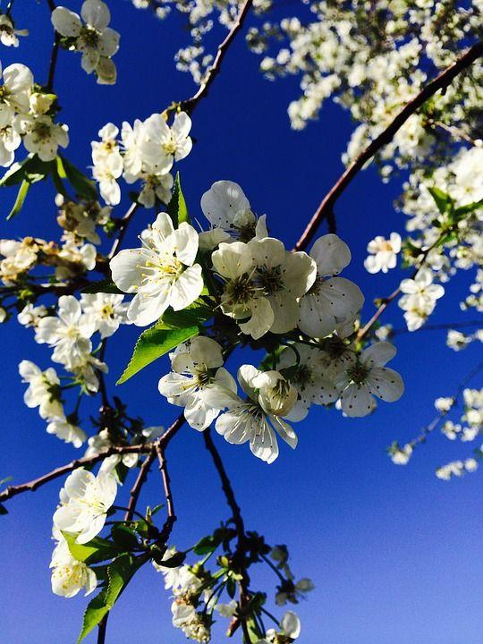 Бесплатные фото на Pixabay - Весна, Цветение, Сад ...