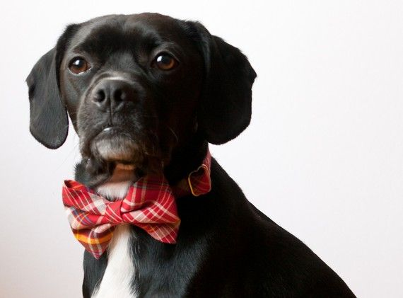 I want Butch to have this collar! Found it on Etsy- Silly Buddy store.