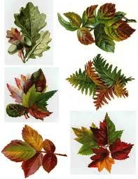 vintage fall leaves - Google Search