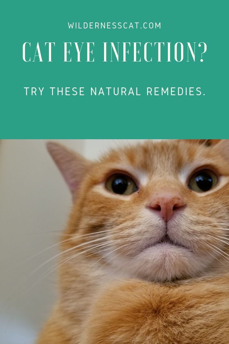 Home remedies for cat eye infection cat eye infection
