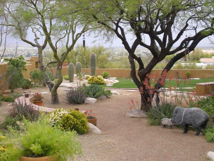 southern arizona landscaping - Google Search Backyard Pinterest