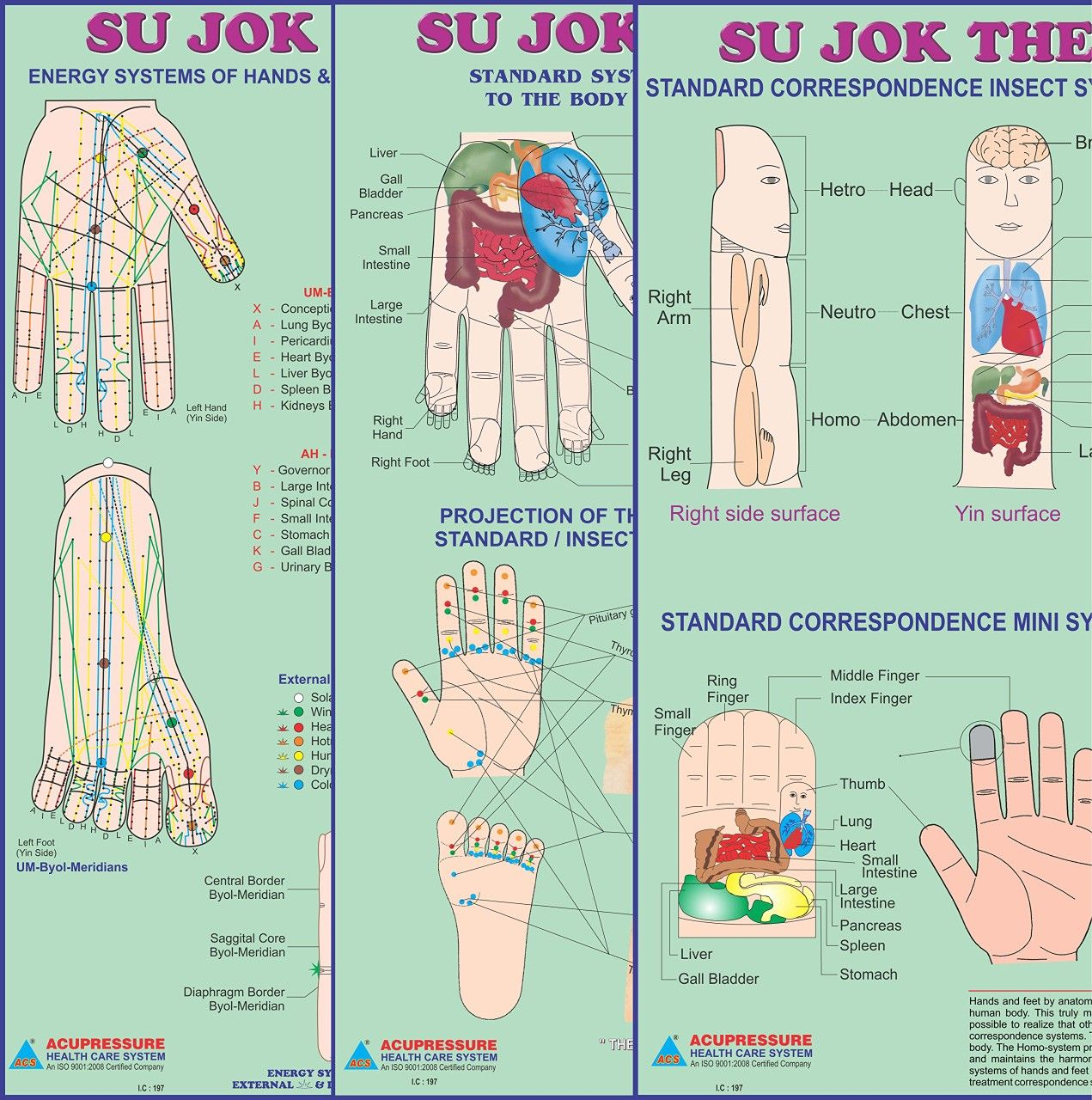 Pin by YourPathToBe on SuJok Therapy in 2020   Acupressure ...