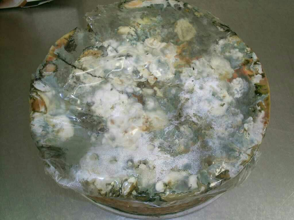 The Best Ideas For Moldy Birthday Cake Home Inspiration