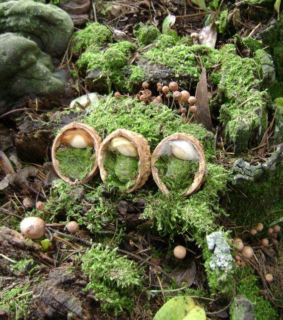 Moss Children in a walnut shell    Waldorf by softearthart on Etsy, $15.00