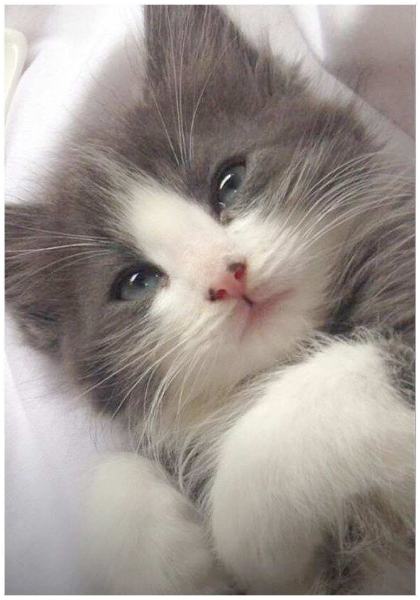 Cute Gif Of Animals Provided Cute Animals To Draw Black And White Cats And Kittens Meowing Non Stop An Kitten Pictures Cute Cats And Kittens Kittens Cutest