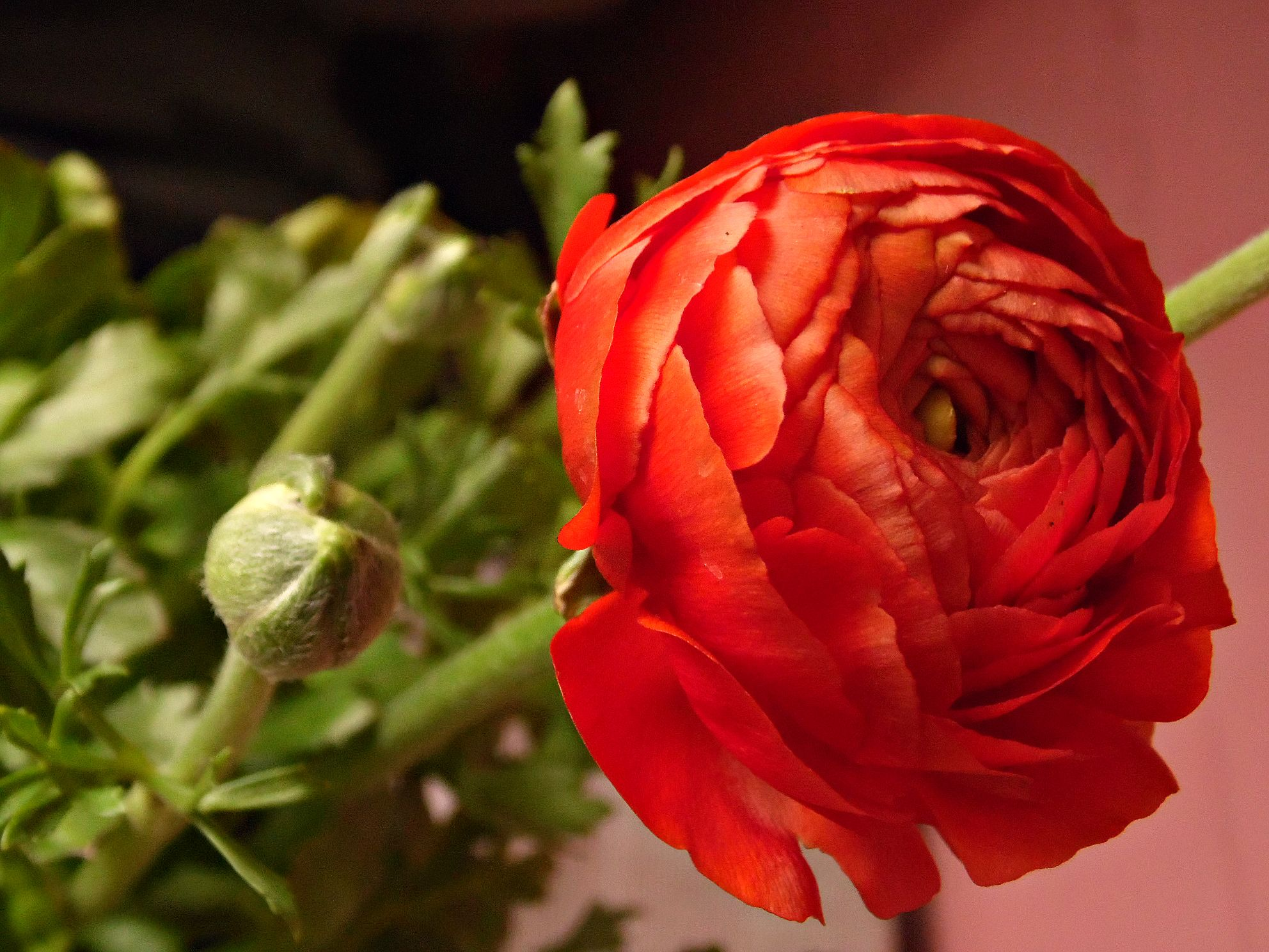 Florcita nueva :3