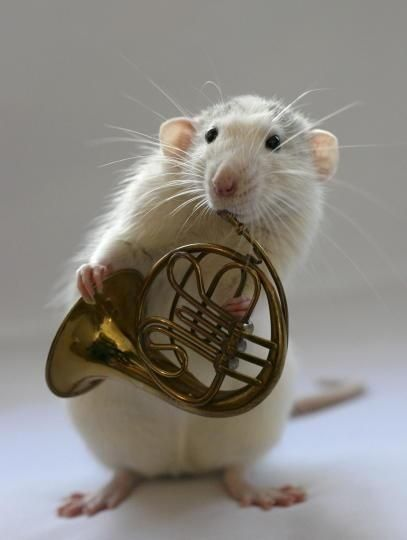 French Horn MOUSE, very talented..