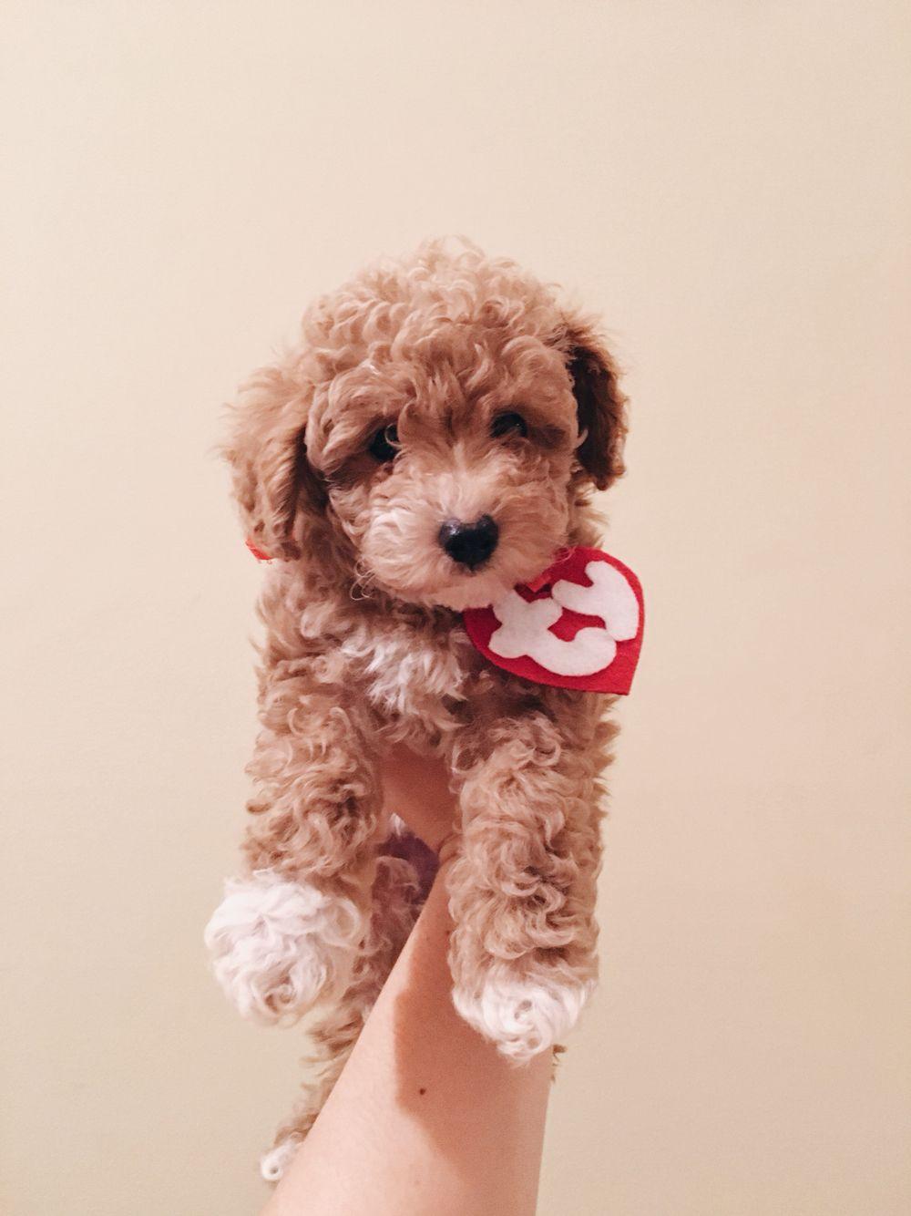 00c8e52ffd8 TY beanie baby Halloween dog costume