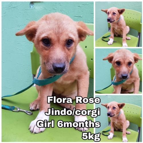 Adopt Flora Rose From Korea on Help homeless pets