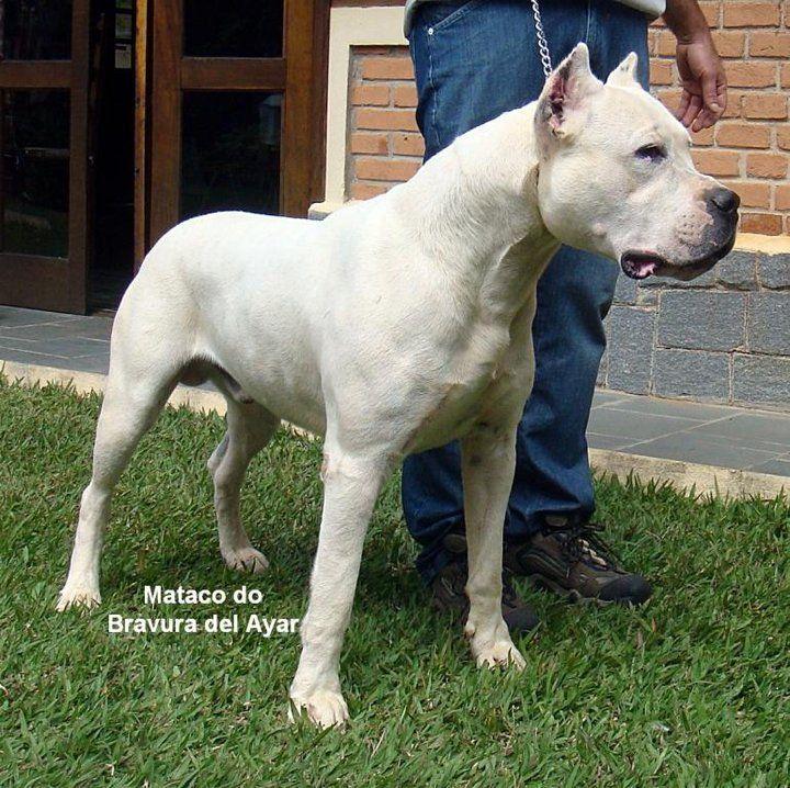 Pin De Gyon Harris En Pupps Perros Animales Argentina