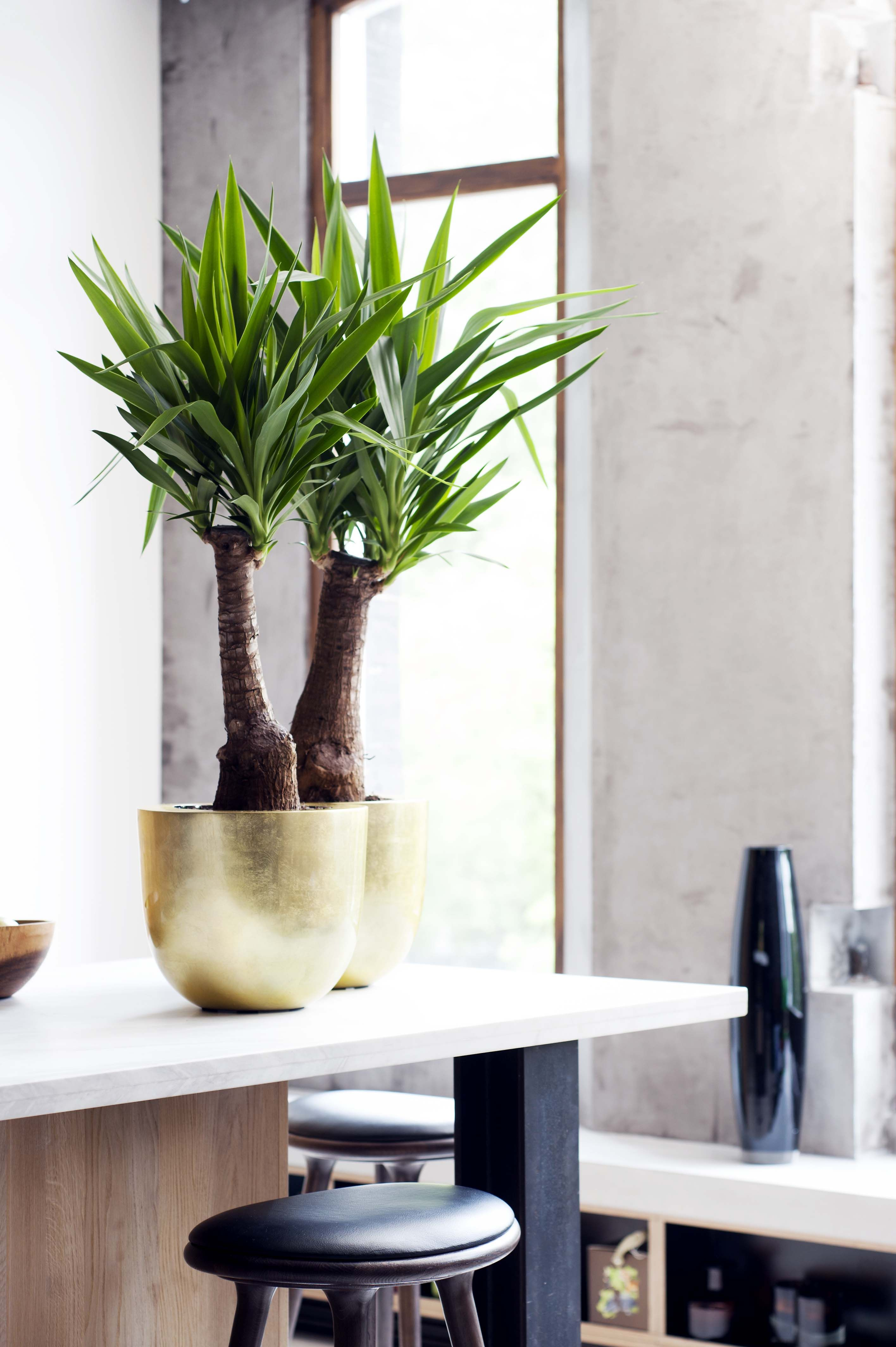 Wohnideen Pflanzen de glänzend töpfchen und kupfer