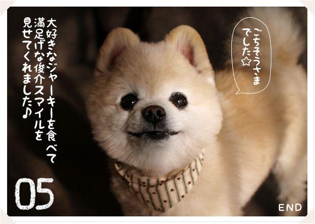 Pomeranian おしゃれまとめの人気アイデア Pinterest Comd ペット いぬ 動物 かわいい