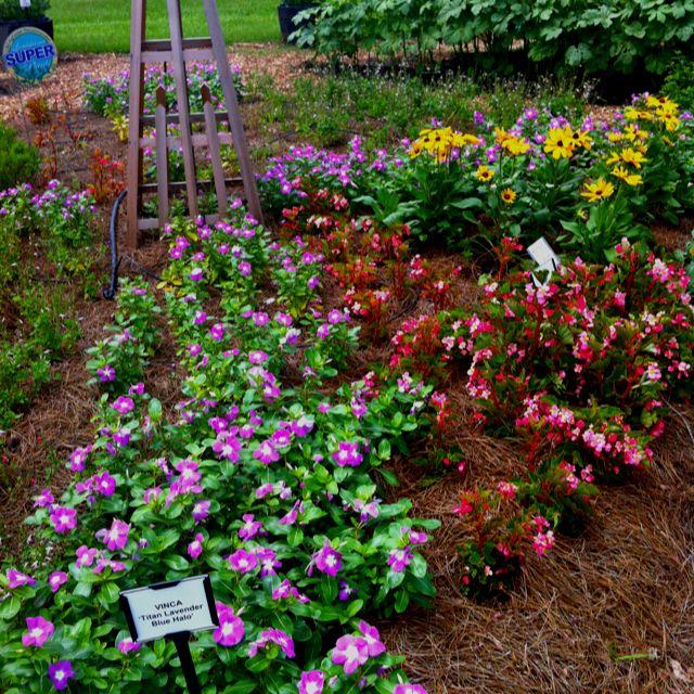 01d2074d73b7059bda38288447e831de - Baton Rouge Garden Center At Independence Botanical Gardens