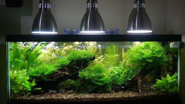 Show Me Your Diy Cfl Fixtures Pets Aquariums