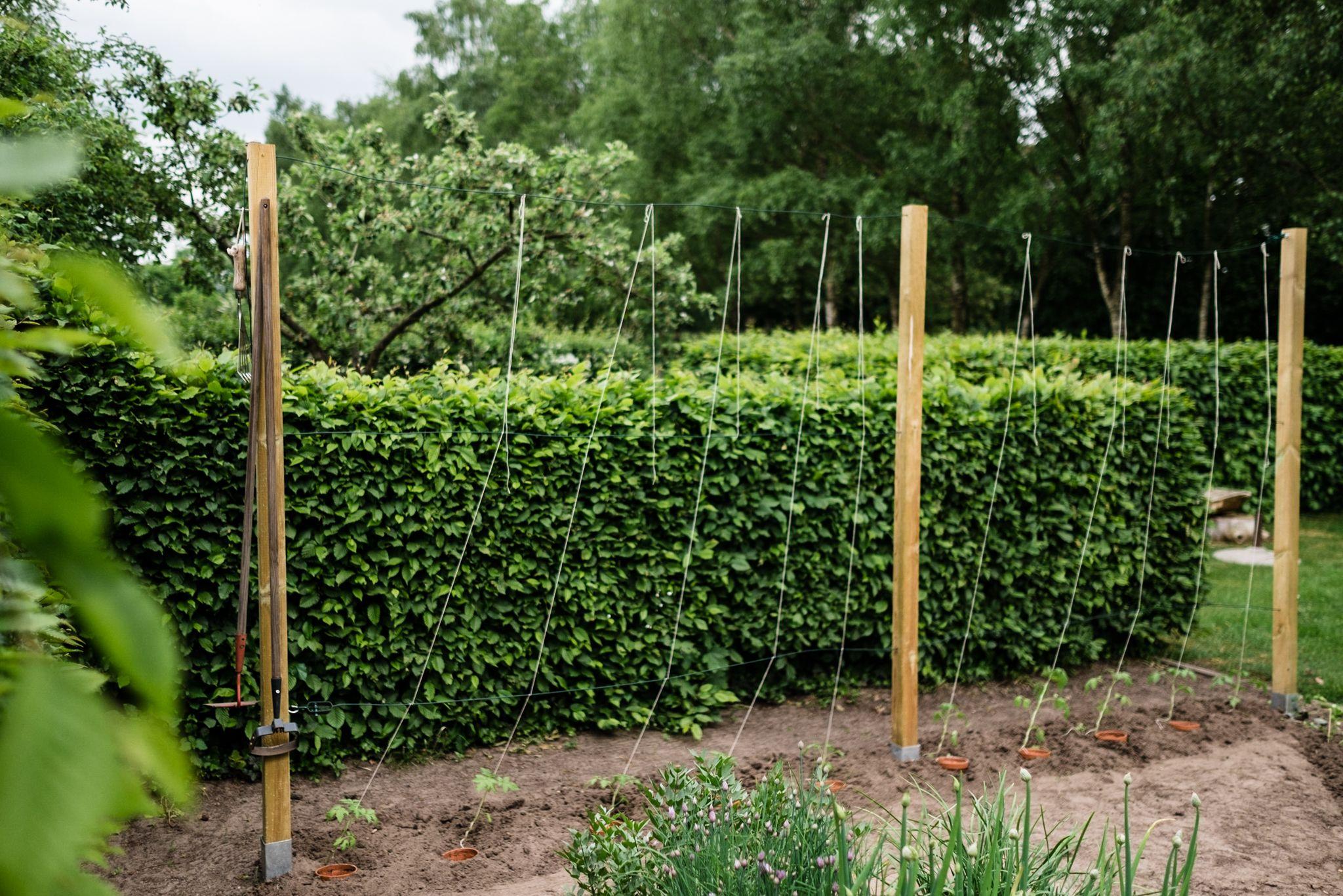 Tomaten Vermehren Pflegen Ernten Teil 5 Auspflanzen Und Rankhilfe Diy Pflanzen Garten Rankhilfe