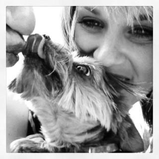 Teacup Yorkie: Love: Princeton