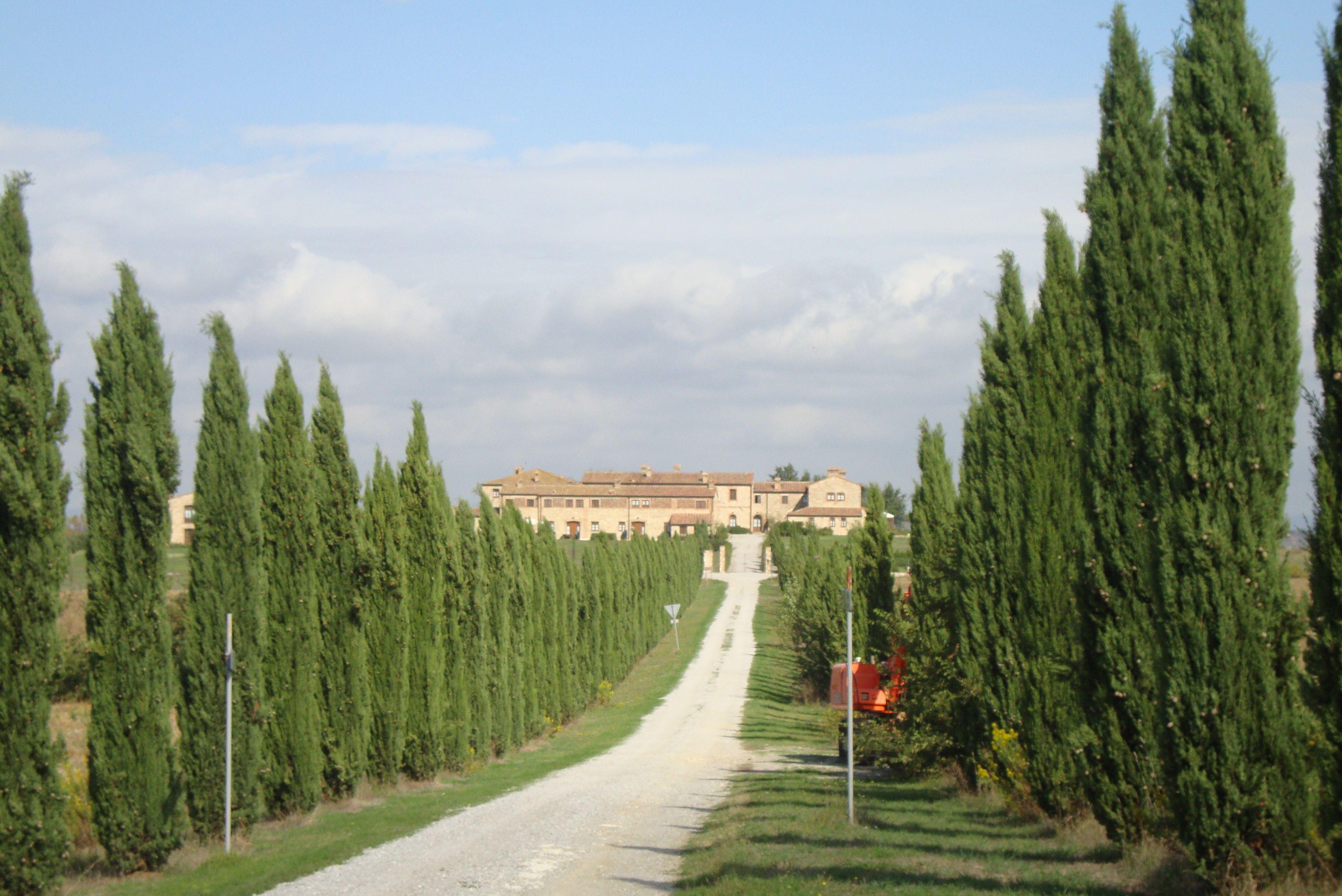 Pode? Caminhos toscanos. Itália, 2010.