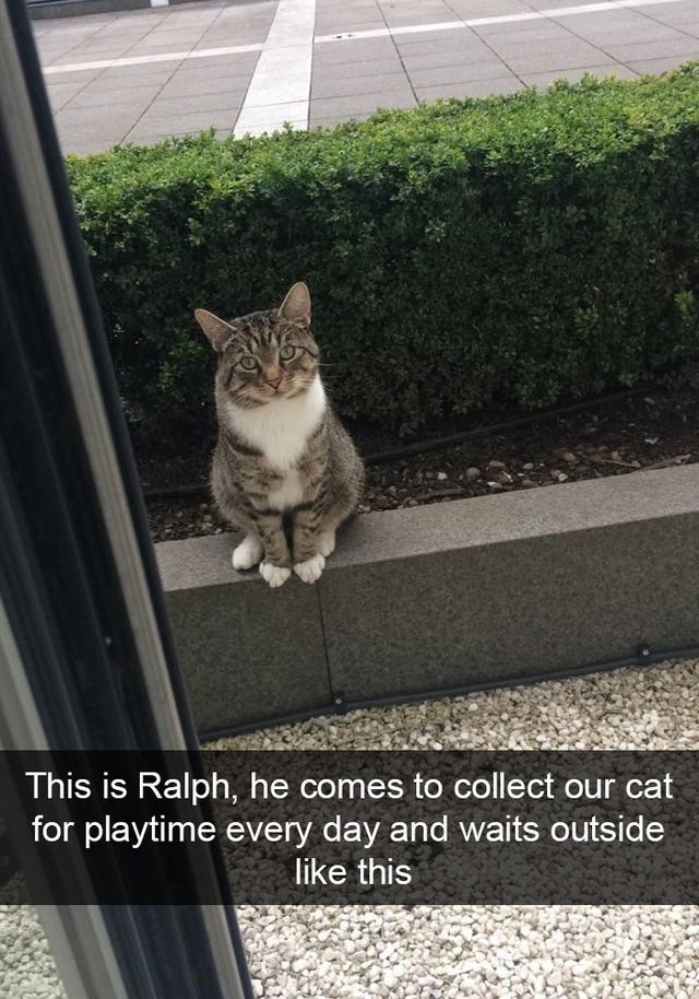 Image of: Dog 50 Hilarious Cat Snapchats That You Need To See Right Meow new Pics Bored Panda Bloglovin Pinterest 50 Hilarious Cat Snapchats That You Need To See Right Meow new