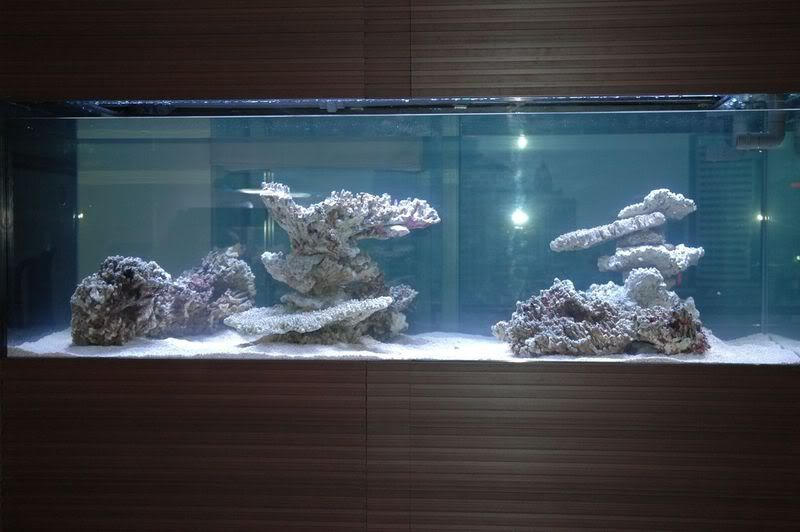 Aquascaping, Show your Skills... - Reef Central Online ...