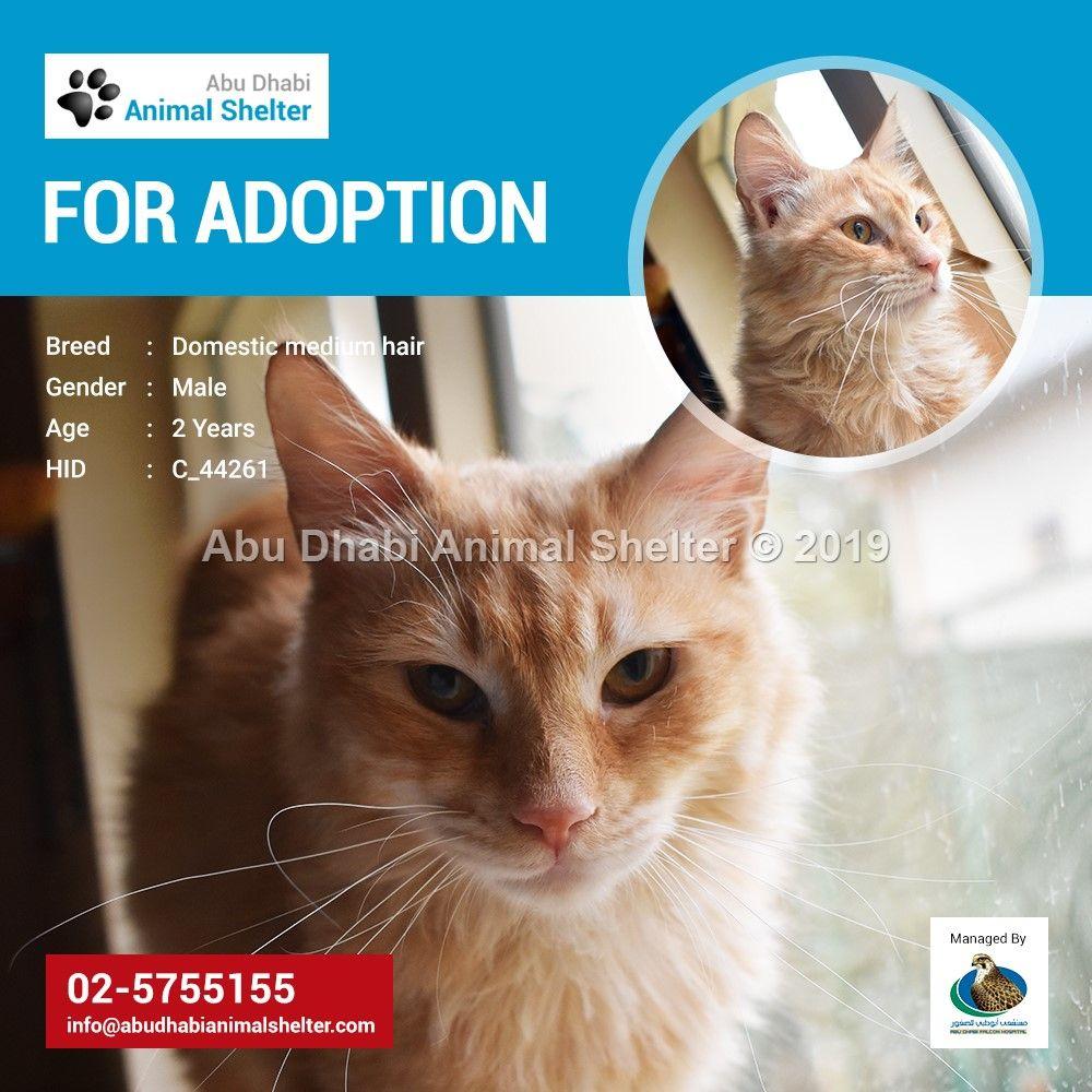 Abu Dhabi Animal Shelter Animal Shelter Dog List Adoption