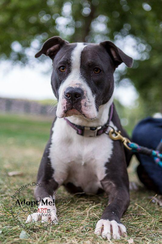 Adopt Penelope On Adoption Animals Dog Adoption