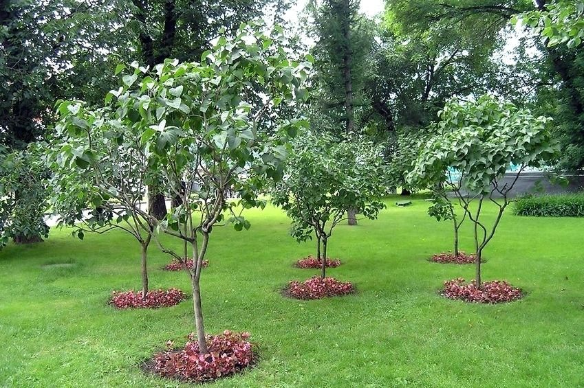 Image result for backyard fruit trees   Small trees for ...
