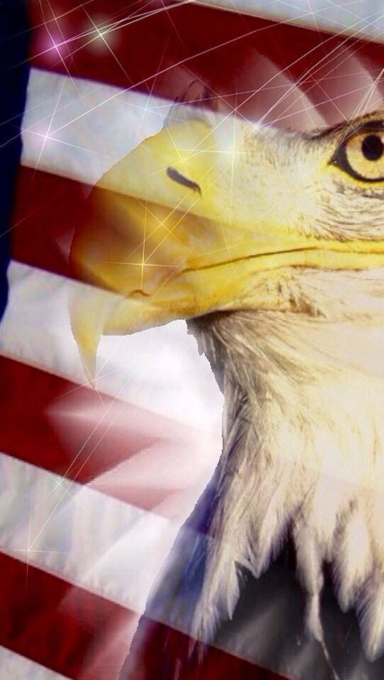 Usa Eagle Wallpaper 64262