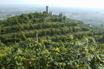 Prosecco di Cartizze, Valdobbiadene Vineyards, Veneto, Italy