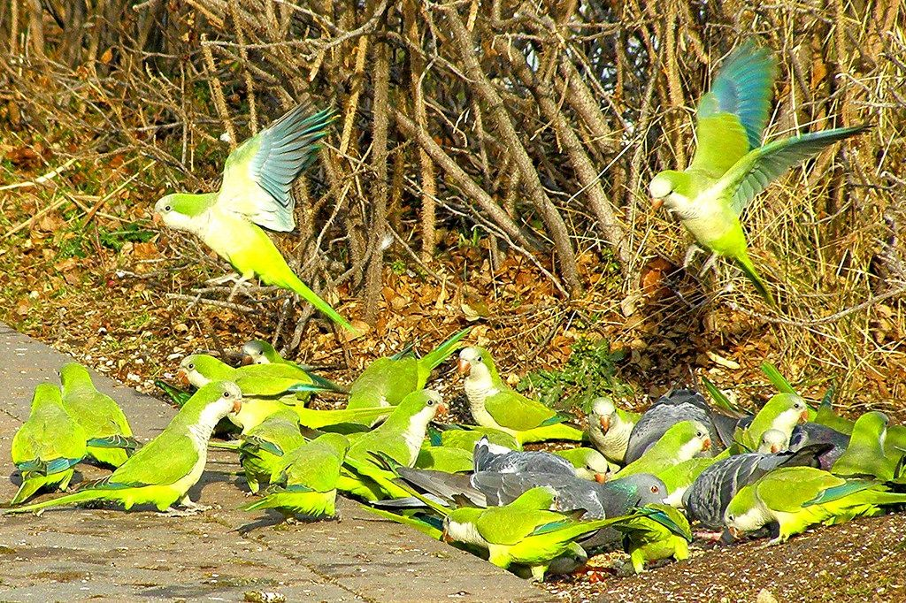 Pin On Parrots And